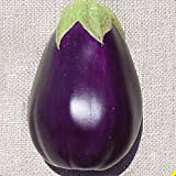 buy Everwilde Farms - 250 Black Beauty Eggplant Seeds - Gold Vault Jumbo Seed Packet now, new 2018-2017 bestseller, review and Photo, best price $2.50