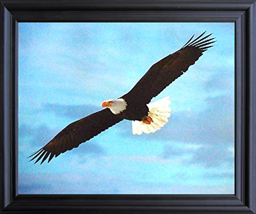 Impact Posters Gallery Soaring Bald Eagle Animal Bird Nature Picture Black Framed Wall Decor Art Print (19x23)