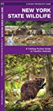 New York State Wildlife, James Kavanagh, 1583552987