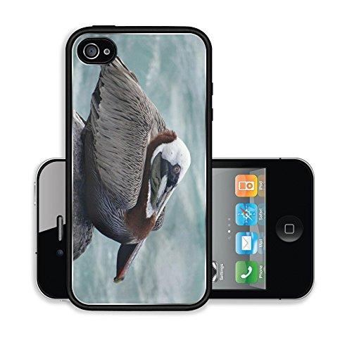 iPhone 4 4S Case P lican brun Pelecanus occidentalis le de San Cristobal Image 20670466384