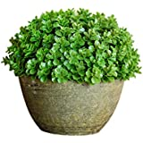 Mini Home Artificial Boxwood Spiral Tree Plant Topiary Tree W Pots 6inch by hilingo