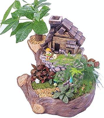 La decoración del jardín Plantas Macetas Plantas creativas Macetas Mini Jardín de hadas Casa dulce Plantas con flores Ollas suculentas Adecuadas for plantas pequeñas Rústico adornos de jardín: Amazon.es: Hogar