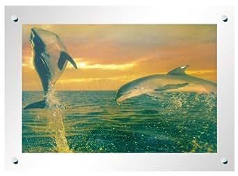 Delfín de Imagen en Movimiento Fotograma Efecto Decorativo con Espejo de Luz Globo 28355 RTI