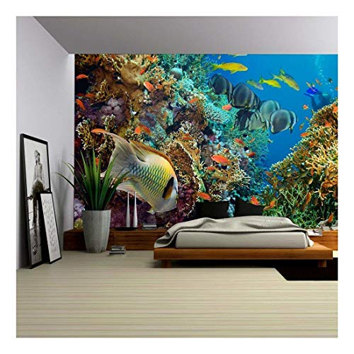 (wall26 - Tropical Anthias Fish with net fire Corals on Red Sea Reef Underwater - Removable Wall Mural | Self-Adhesive Large Wallpaper - 100x144 inches)