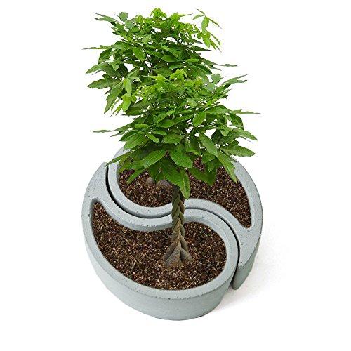 SHZONS Mini Succulent Pot, Succulent Plant Flower Pot,Silicone Mold Gypsum Cement Fleshy Flower Bonsai DIY Ashtray Candle Holder Mould