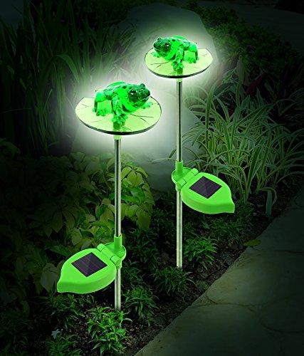 Frog Led Light