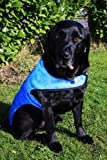 Prestige Cool Coat for Dogs, M, Blue