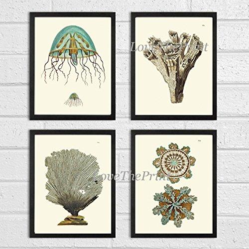 fish art prints - 4