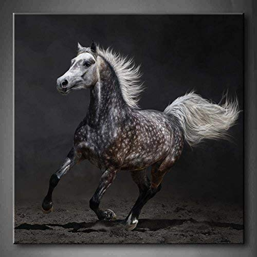 Yaoni Gray Arabian Mare Gallops On Dark Background Soil Wall Art Painting Pictures Print On Canvas Animal 32x32inch by Yaoni