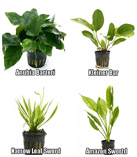 4 Potted Live Aquarium Plants Bundle - Anubia, Amazon Sword, Kleiner Bar, Narrow Leaf