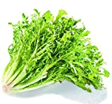 Original Pack 5g 1900+pcs Yellow Heart endive,Wild vegetable seeds, endive seeds bonsai plant DIY home garden
