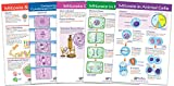 NewPath Learning 94-7014 Mitosis Bulletin Board Chart Set (Pack of 5)