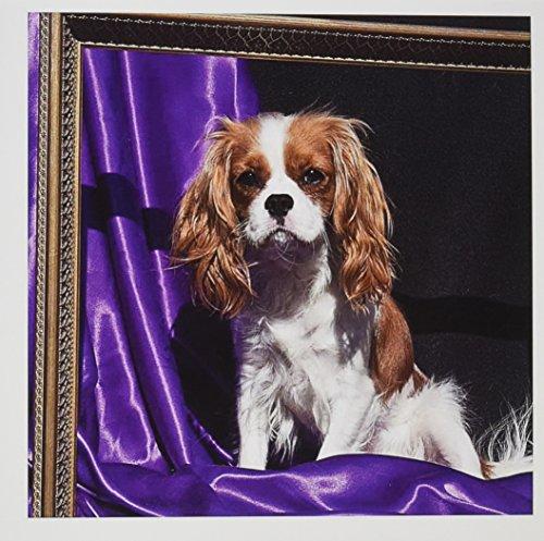 3dRose Cavalier King Charles Spaniel Dog -