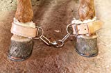 M-Royal USA Made Horse Chain Hobble Leather Horse