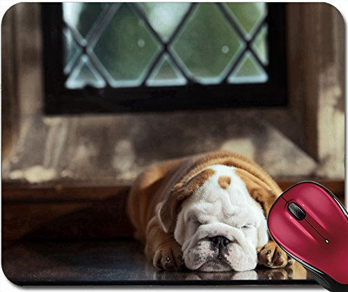 Liili Mousepad Cute english bulldog puppy in in a luxury room indoors laying by a window Photo 20573804
