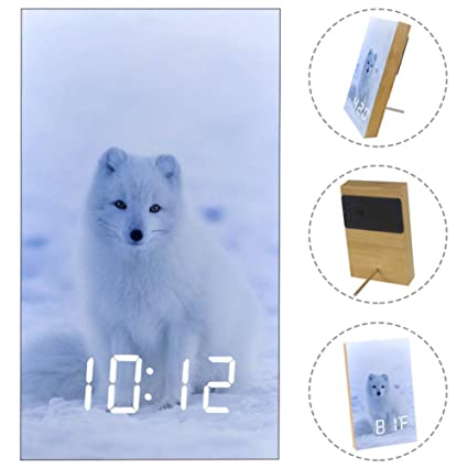 Amazon.com: Yuzheng A White Fox On Iceland Animal Digital ...