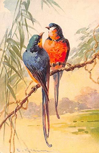 Birds Sitting on Branch Artist Signed Klein Antique Postcard J80446