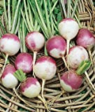 Heirloom Purple White Top Turnip Seed by Stonysoil Seed Company