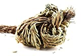Gracefulvara 2 Pcs Live Resurrection Plant Seeds