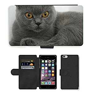 "CARD POCKET BOOK CASE PU LEATHER CASE // M00147919 British Shorthair acariciado Gray // Apple iPhone 6 4.7"""