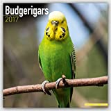 Budgerigars Calendar - Parakeet Calendars -2017 Wall calendars - Calendars 2016 - 2017 Wall Calendars - Bird Calendars - Monthly Wall Calendar by Avonside