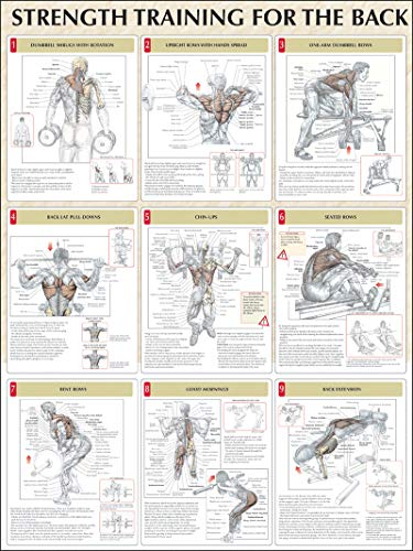 Strength Training Anatomy: Strength Training for the Back Poster