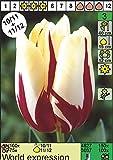 """Triumph Tulpen"""" World Expression"""" (5 Blumenzwiebeln)"""