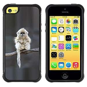 Paccase / Suave TPU GEL Caso Carcasa de Protección Funda para - Japanese Snow Monkey Ape Cute - Apple Iphone 5C