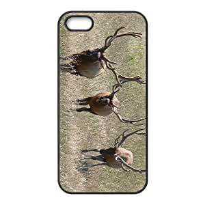 Deer Herd Hight Quality Plastic Case for Iphone 5s