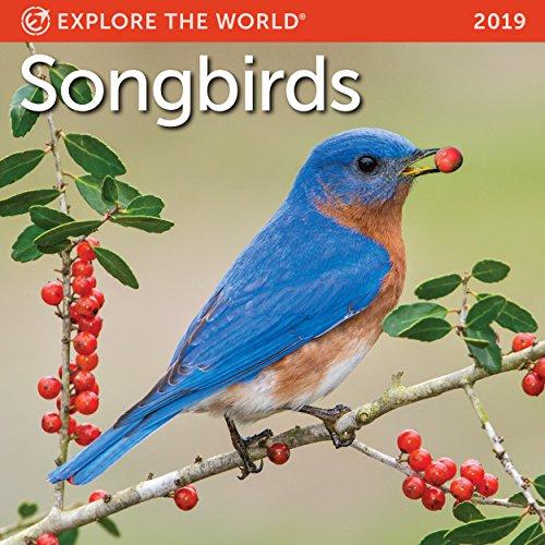 Songbirds Mini Wall Calendar 2019 Monthly January-December 7