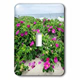 3dRose LSP_279050_1 Beach Roses, Madaket, Nantucket, Massachusetts, USA Toggle Switch, Multicolor