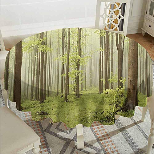 Suchashome Camping Round Tablecloth Woodland Misty Spring Beech Forest in The Mountains of Central Europe Wild Nature Picture Green Beige Circular Table Cover Diameter - Beech 36 Inch Desk