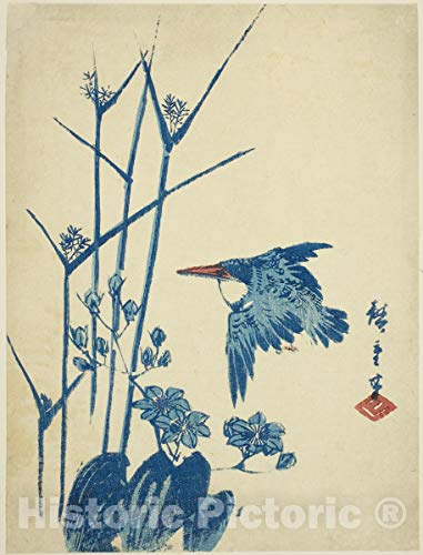 "1960 Vintage /""BELTED KINGFISHER /& CUCKOO BIRDS/"" by WEBER GORGEOUS Lithograph 42"