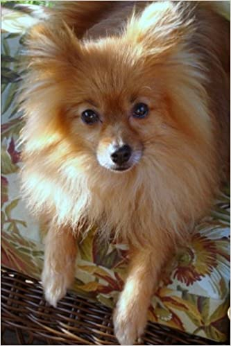 Buy The Pomeranian Dog Journal 150 Page Lined Notebook Diary Book