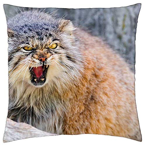 Jbralid Pillowcase Fierce Manul Pallas Cat Indoor Home Throw Pillow Cover Decorative Pillow Covers Standard Size 24x24 Inch
