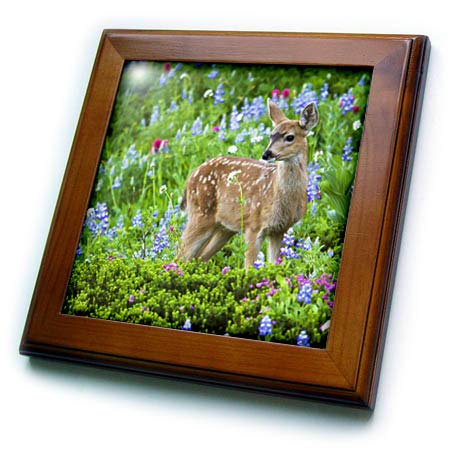 (3dRose Danita Delimont - Deer - Black-Tail Deer Fawn, Cascade Wildflowers - 8x8 Framed Tile (ft_315167_1))