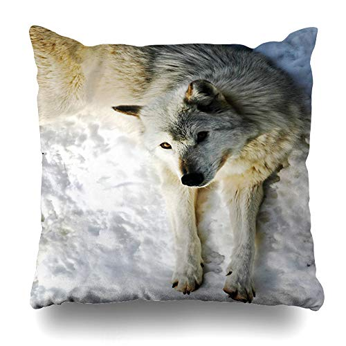 Ahawoso Throw Pillow Cover Hunt Camo White Wolf Looking Up Wildlife Nature Camouflage Eyes Hungry Look Design Decor Zippered Cushion Case 16