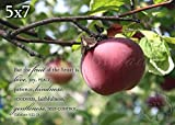 Fruit of the Spirit on Apple Photo Galatians 5:22-23
