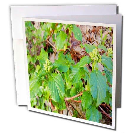 Green Square Photo Card - 3dRose TDSwhite – Spring Seasonal Nature Photos - Spring Greens - 6 Greeting Cards with Envelopes (gc_284311_1)