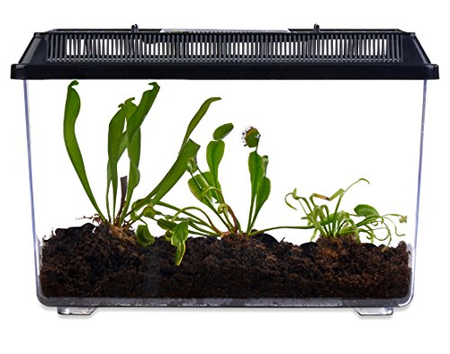 Live Adult Carnivorous Plants in Deluxe Terrarium, Venus Fly Trap, Pitcher Plant and Sundew (Pitcher Plant Terrarium)