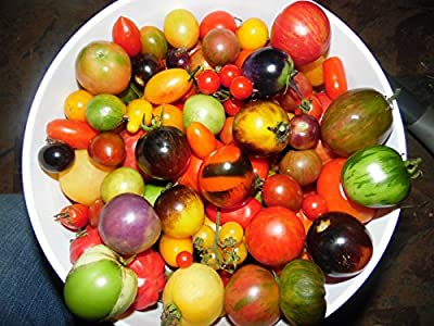 Pack of 100 Seeds From a Mix of 50 DIFFERENT KINDS of Cherry Tomatoes!