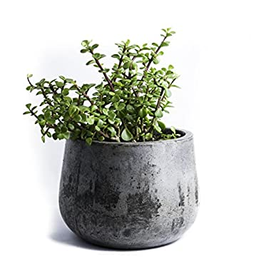 Repose Samai Succulent Planter, Large