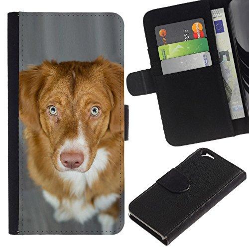 EuroCase - Apple Iphone 6 4.7 - nova scotia duck tolling retriever dog - Cuir PU Coverture Shell Armure Coque Coq Cas Etui Housse Case Cover