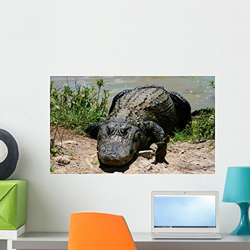 Everglade Alligator (Everglades Miami Alligator Wall Mural by Wallmonkeys Peel and Stick Graphic (24 in W x 14 in H) WM81733)
