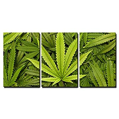 it is good, Delightful Work of Art, Big Marijuana Leaf Close Up with Texture Background of Cannabis Leaves x3 Panels