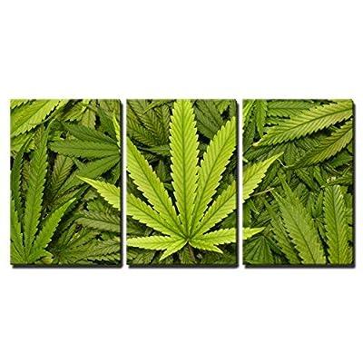 Marijuana Leaf Close Up - 3 Panel Canvas Art