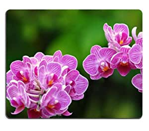 Close Up Flowers Orchids Pink Mouse Pads Customized Made to Order Support Ready 9 7/8 Inch (250mm) X 7 7/8 Inch (200mm) X 1/16 Inch (2mm) High Quality Eco Friendly Cloth with Neoprene Rubber MSD Mouse Pad Desktop Mousepad Laptop Mousepads Comfortable Computer Mouse Mat Cute Gaming Mouse pad