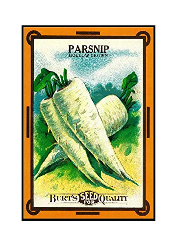 Parsnip (hollow crown) Seed Packet (24x36 Framed Gallery Wrapped Stretched Canvas)