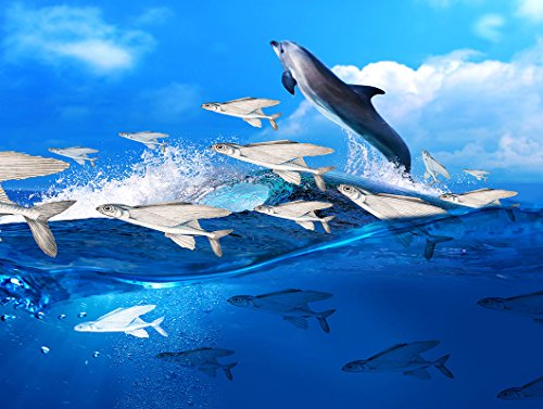 (TSlook Wall Art poster Print Canvas Prints Artwork Pictures Blue Ocean Dolphin Flying Fish Waves 16
