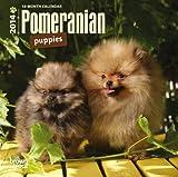 Pomeranian Puppies 18-Month 2014 Calendar (Multilingual Edition)